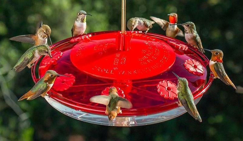 Reviews Of 19 Best Bird Feeders of all 2020