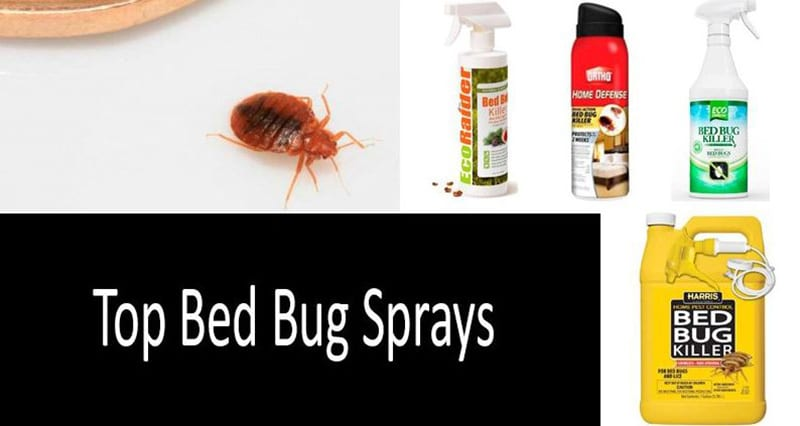 Reviews Top Best Bed Bug Spray of all 2020