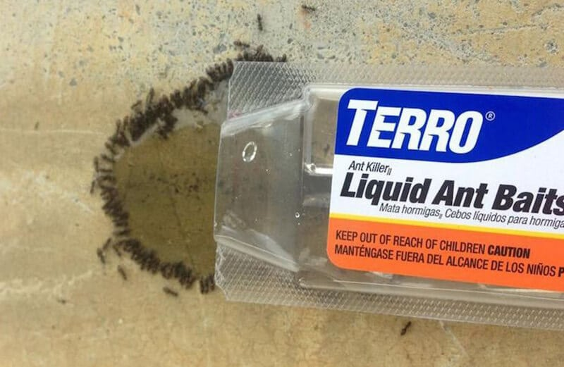 Things to Look for The Best Ant Bait