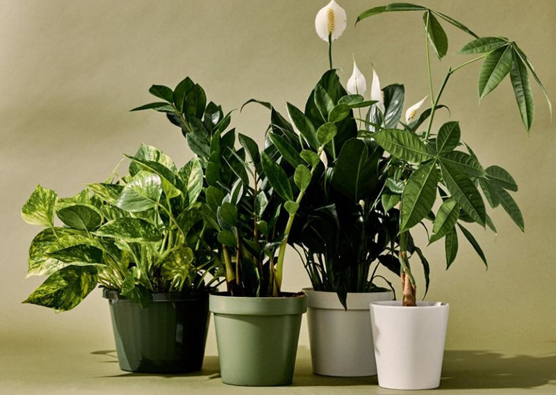 Top 15 Best Bathroom Plants For You