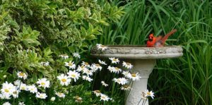 Top Best Bird Bath 2020
