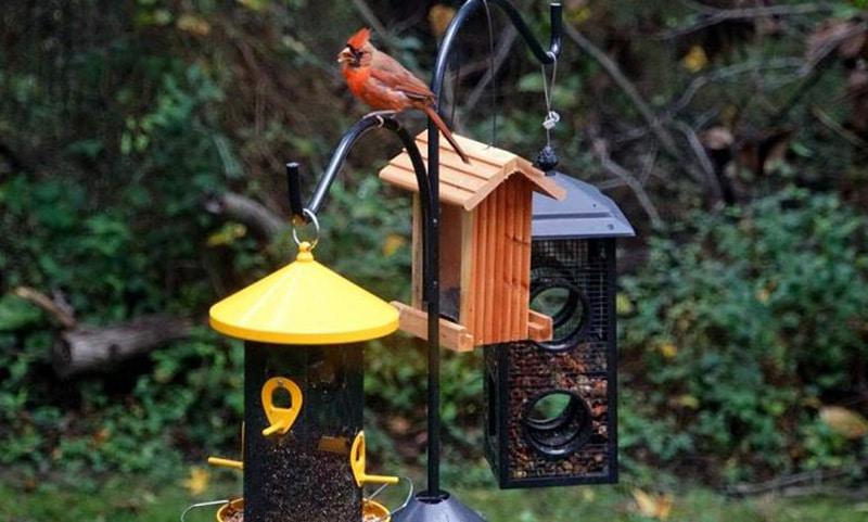 Top Best Bird Feeders 2020
