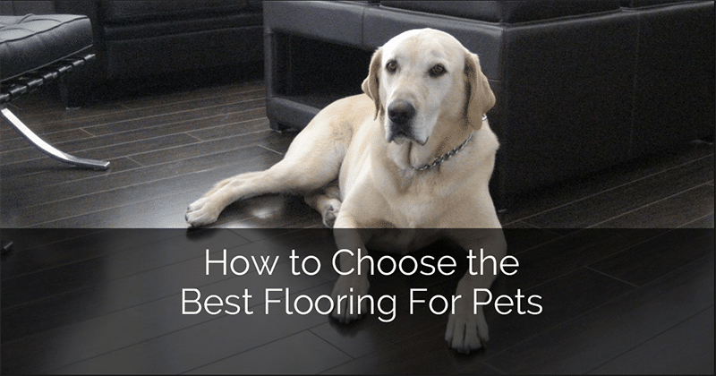 Top Best Flooring For Dogs 2020