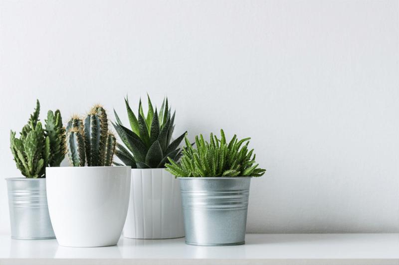 best faux plants 1